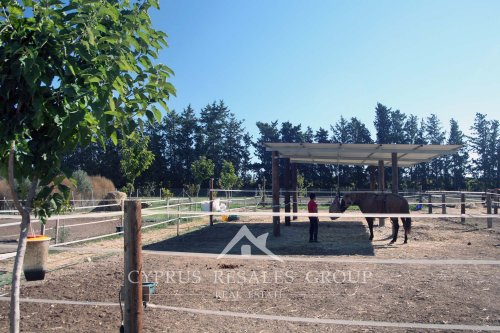 Geroskipou Equestrian - horse rides and lessons for children and adults