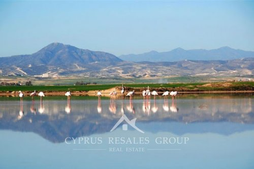 The Salt Lake is an enchanting attraction of Larnaca.