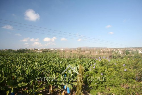 Lush banana plantations on the coast of St George, Paphos, Cyprus